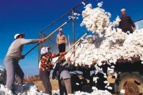 一师棉麻公司销售皮棉实现营业收入近40亿元