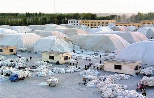 一师棉麻公司推进棉花产供销体制改革